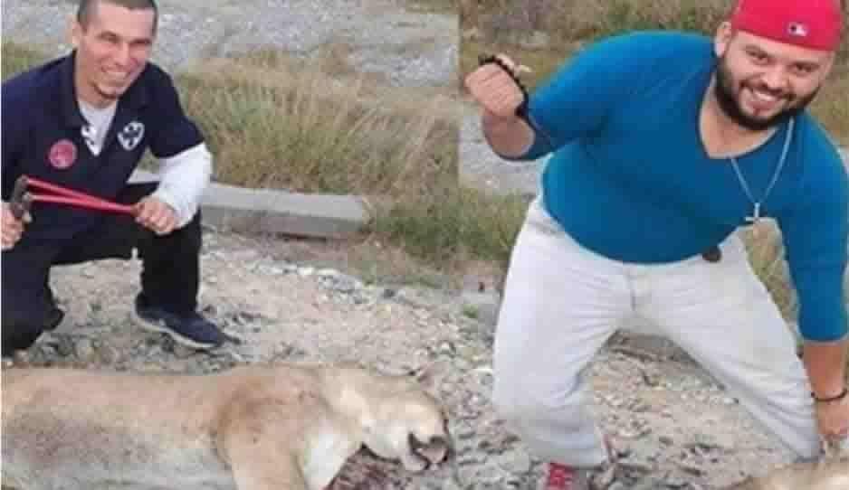 ¡Indignante! Sujetos matan a un puma en Nuevo León; Profepa hace denuncia penal