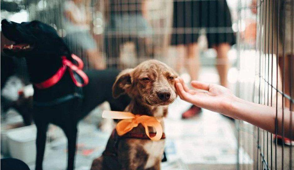 Perritos recibirán atención veterinaria gratis en Tlaxcala