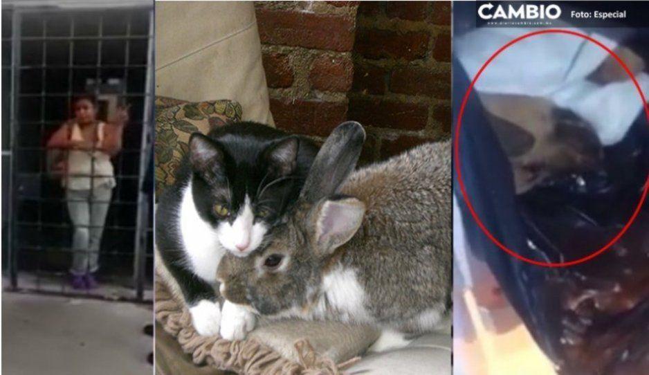 La comeperros también se alimentaba de gatos, palomas y conejos; rescatan a 45 de sus manos siniestras