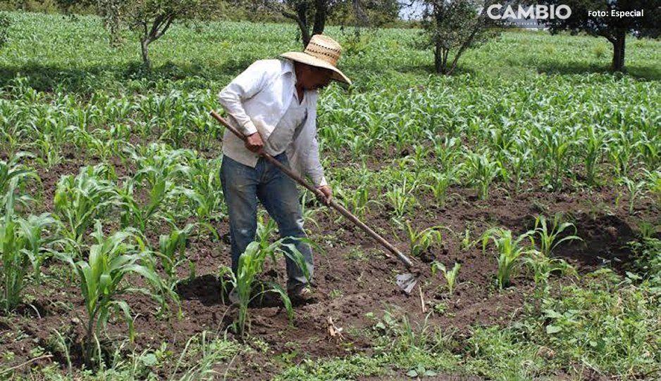 ¡Hacen de todo menos ponerse a trabajar! Fingen ser campesinos y roban camioneta en Tochtepec