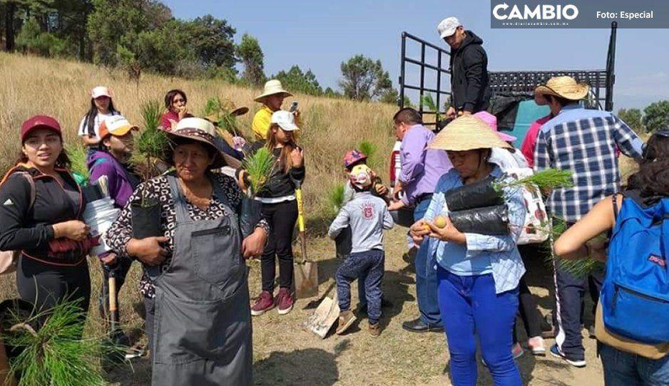 Plaga extermina árboles del cerro Zapotecas en San Pedro; autoridades cruzadas de brazos