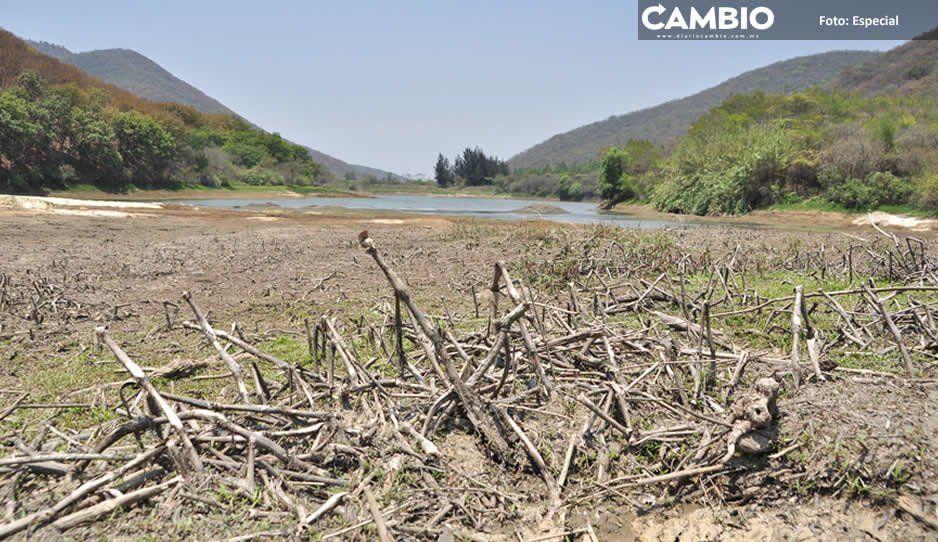 Sequía afecta a campesinos y ganaderos en Sierra Norte; van dos meses sin lluvia