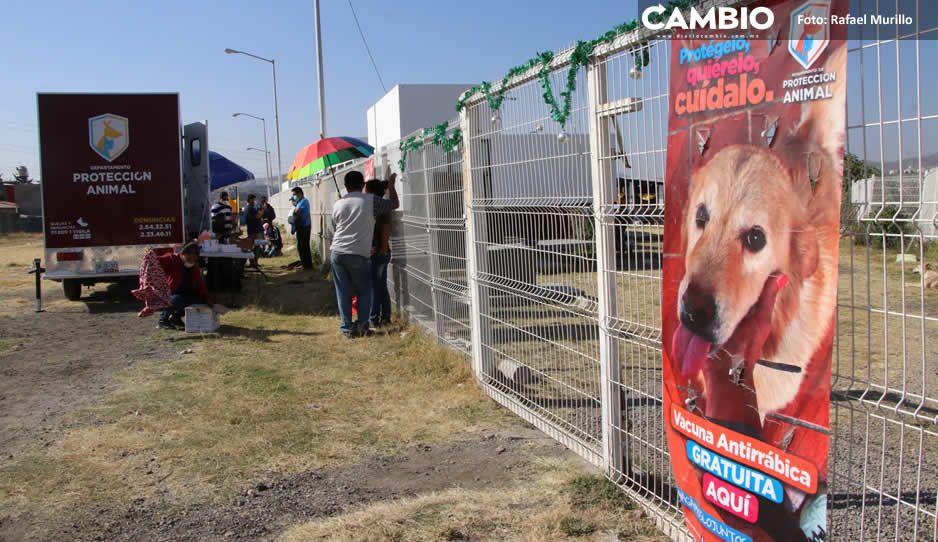 Claudia manda a recoger perros muertos de la estancia canina tras exhibida de CAMBIO (FOTOS Y VIDEOS)