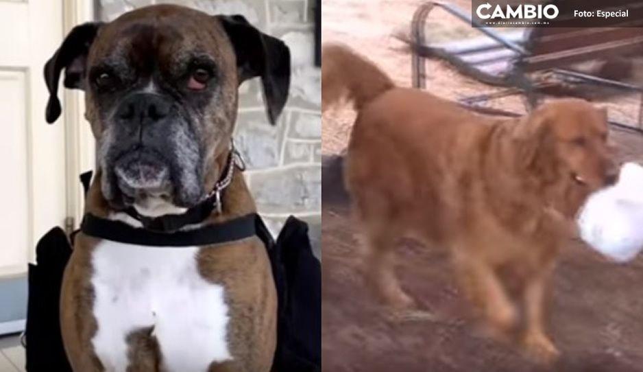 No solo es el mejor amigo del hombre: Perros llevan vinos y despensas a domicilio en esta cuarentena (VIDEO)