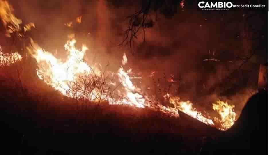 Fuerte incendio casi devora bosque en Las Haras