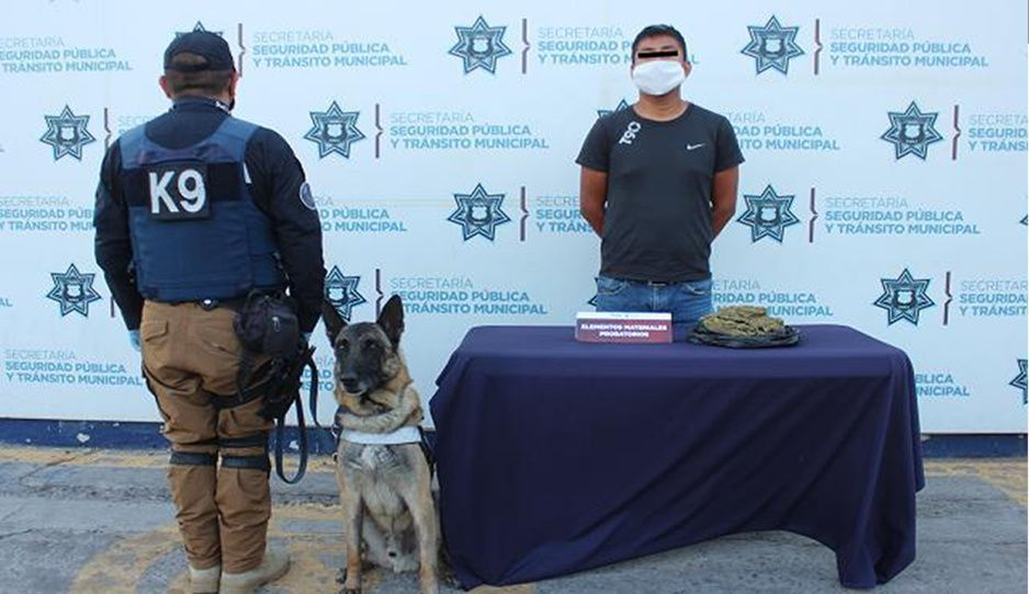 Capturan a narcomenudista en la CAPU con más de medio kilo de marihuana