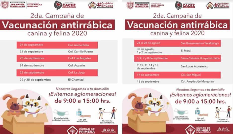 Vacuna a tu perrito: el Gobierno de Texmelucan te lo invita