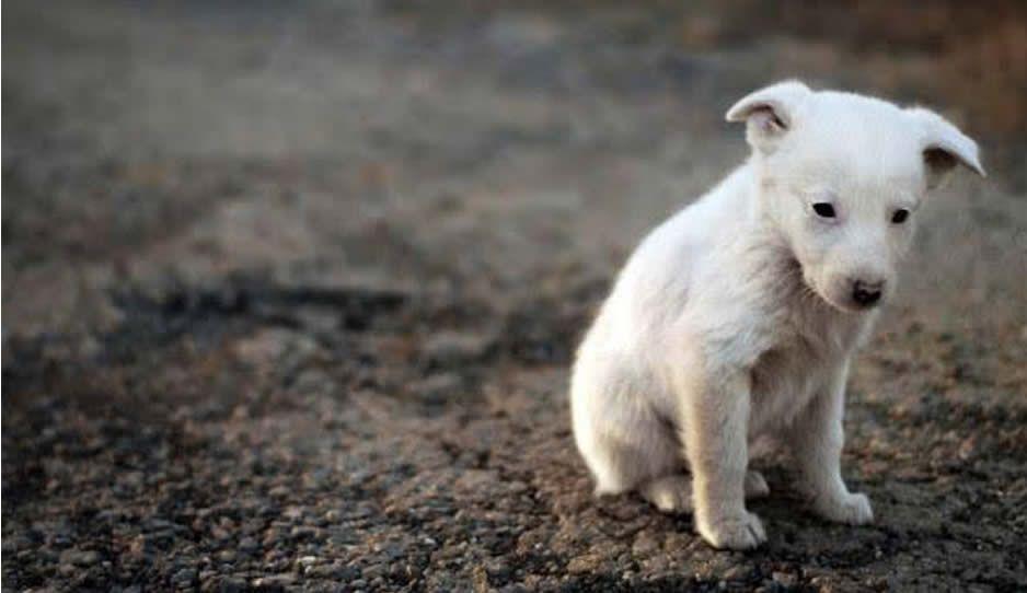 ¡Malnacidos! Matan a perrito y lo cuelgan de alambre de púas en Ajalpan
