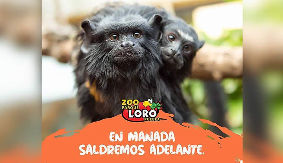 ¡Parque Loro necesita ayuda! No tienen dinero para alimentar a los animalitos