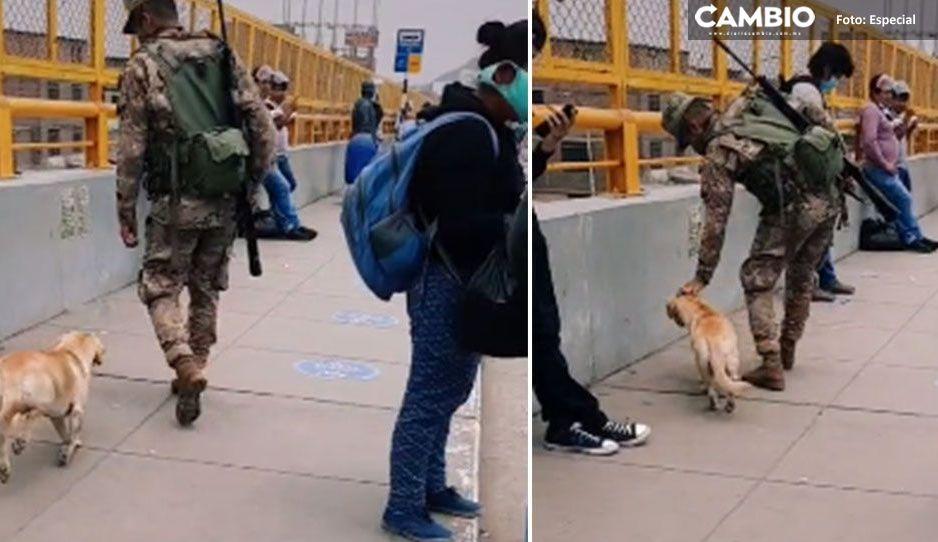 Perrito callejero es acariciado por soldado y lo acompaña durante su trabajo (VIDEO)