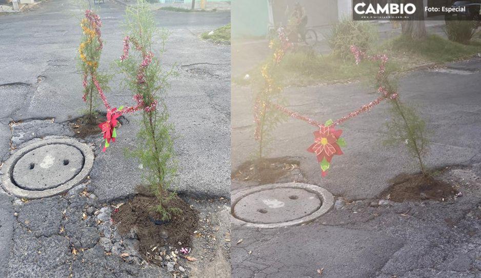 ¡Baches navideños! Vecinos de Club de Golf colocan arbolitos en cráteres que no repara Claudia
