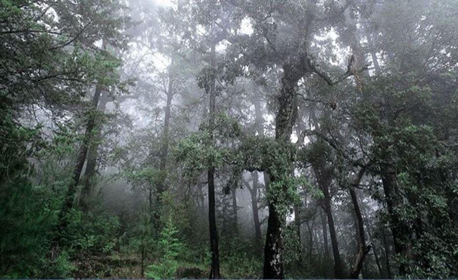 Edil de Zoquitlán planea tirar 20 árboles para poner las letras del municipio