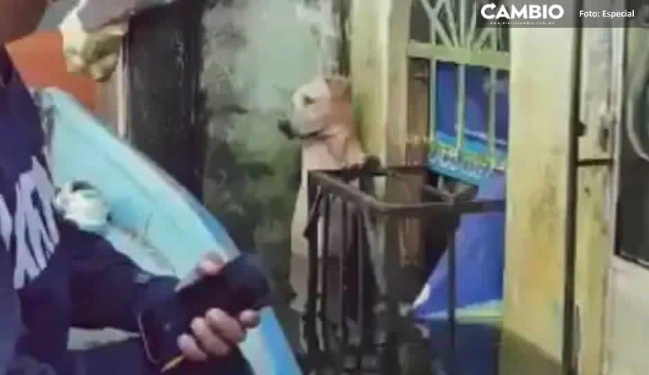 Marinos salvan a perrito que estaba a punto de ahogarse en Tabasco (VIDEO)