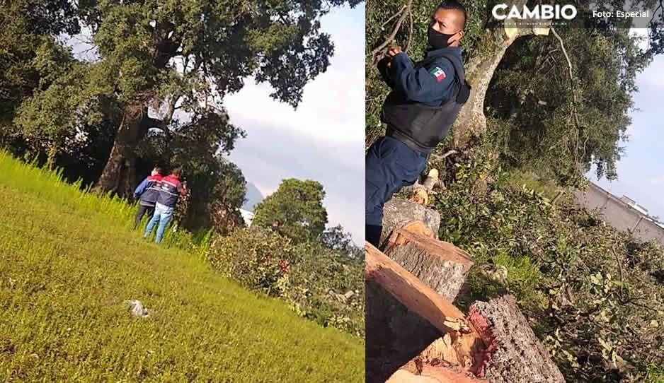 Protección Civil de Amozoc acude a llamado por tala clandestina