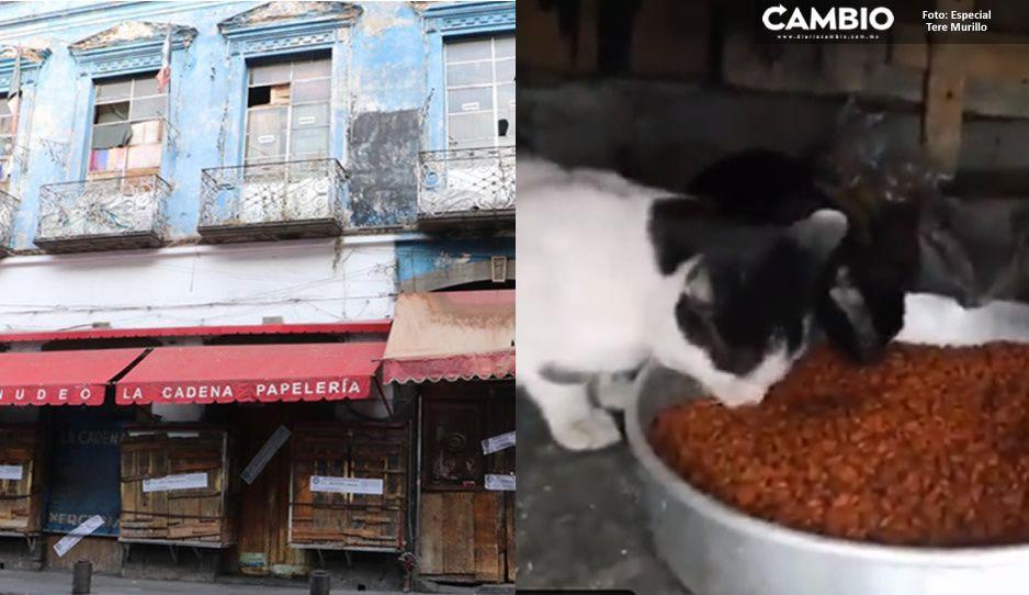 En la Maldita Vecindad también vivían 80 perros y gatos que fueron abandonados por sus crueles dueños