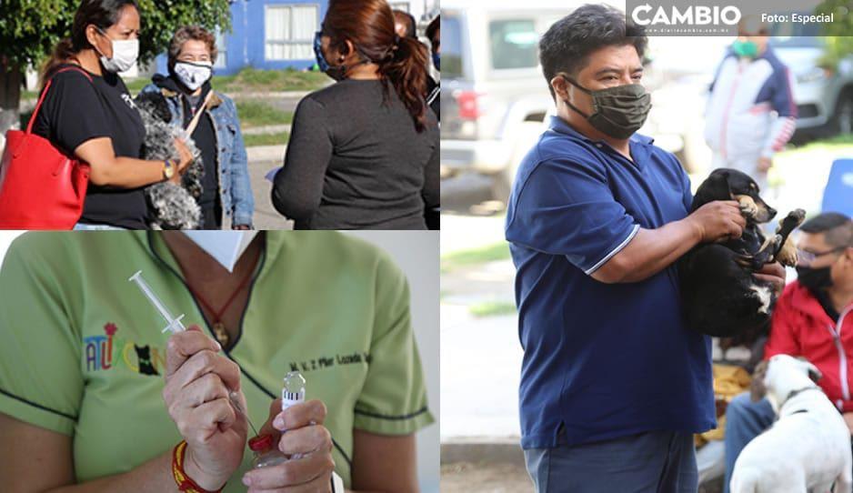 Ayuntamiento de Atlixco inicia campaña de esterilizaciones gratuitas en colonias del municipio