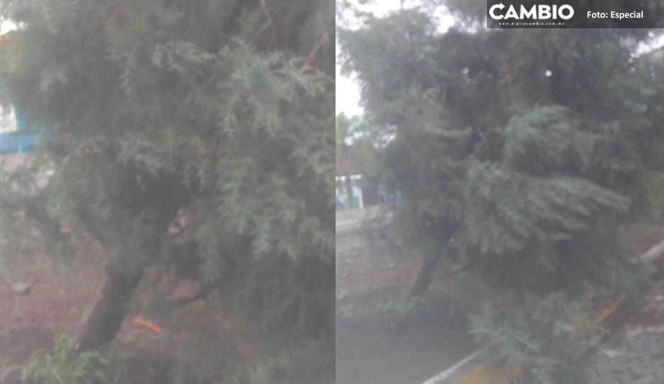 Fuertes lluvias provocan pánico en Izúcar de Matamoros; derribaron árboles y dañan el paso