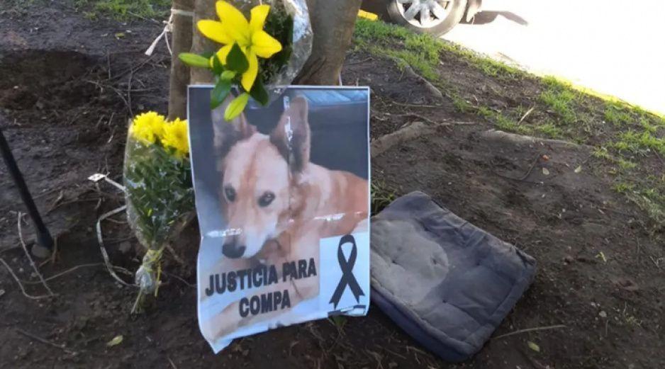 VIDEO: Perrito defiende a su dueño del abuso de tres policías y termina baleado #JusticiaParaCompa