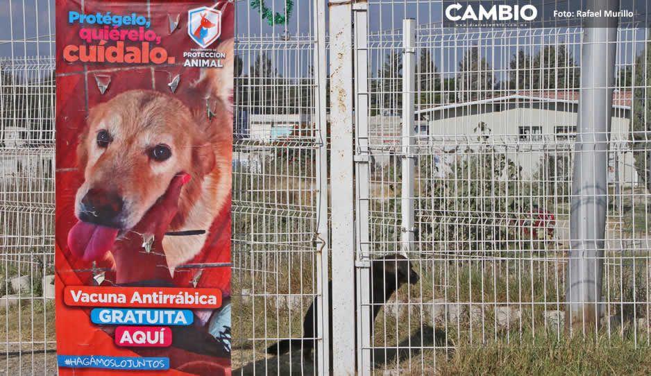 Desde 2019 Claudia ha ignorado las denuncias de las estancias caninas
