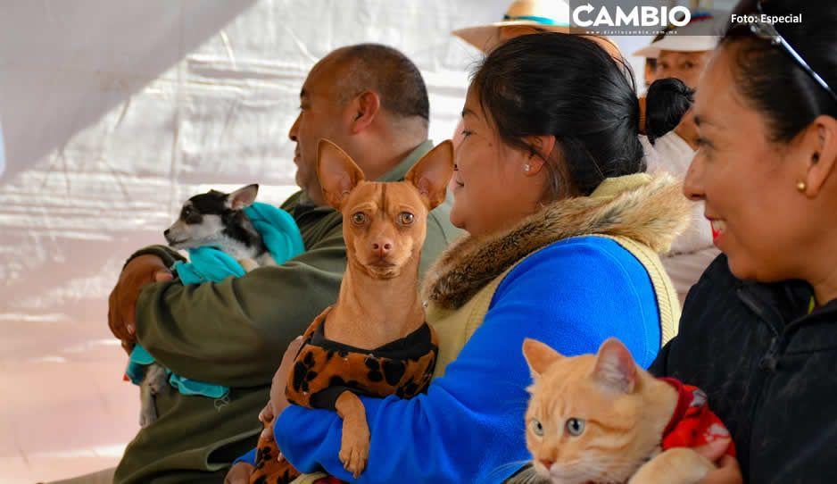 Ayuntamiento de Cuautlancingo invita  a vacunar a perros y gatos contra rabia