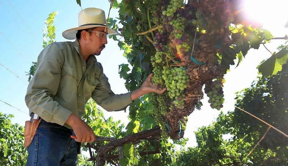 Se suicida en Huaquechula al regresar de la pizca de uva