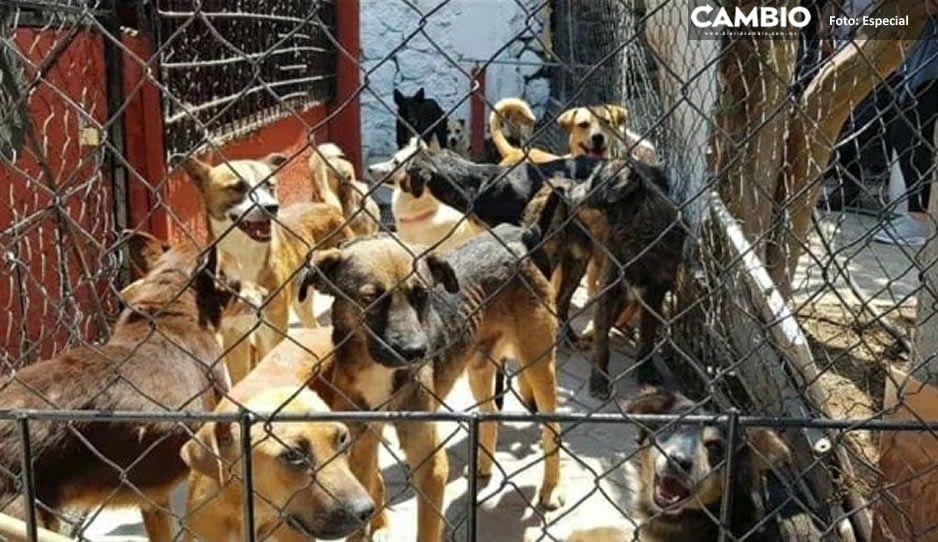 Descarta Ayuntamiento de Atlixco brote de moquillo en la perrera municipal