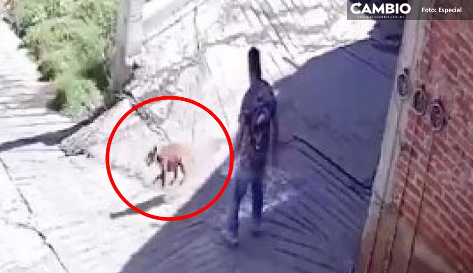 #ConLosPerritosNo Hombre rompe botella de vidrio a un perrito en Huixquilucan (VIDEO)