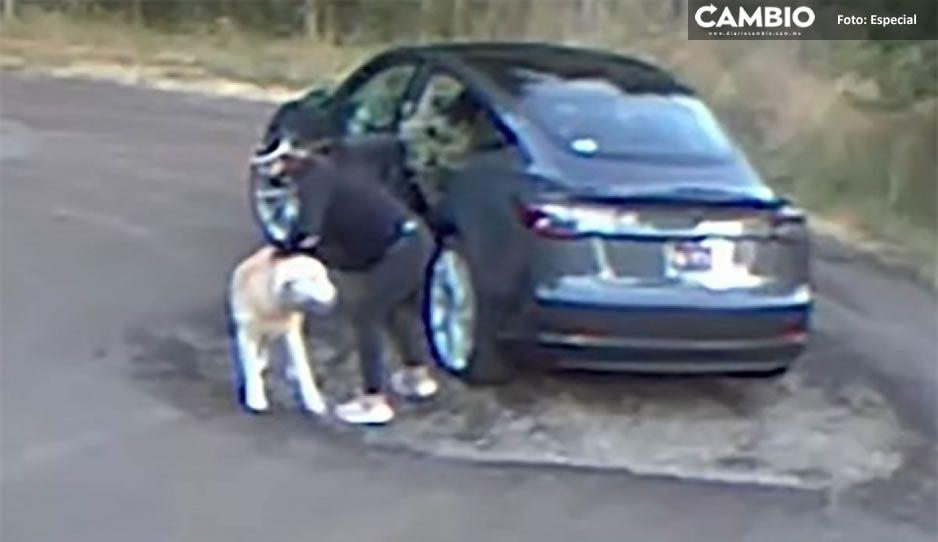 ¡Indignante! Graban a desalmada abandonando a su perrito en el bosque (VIDEO)