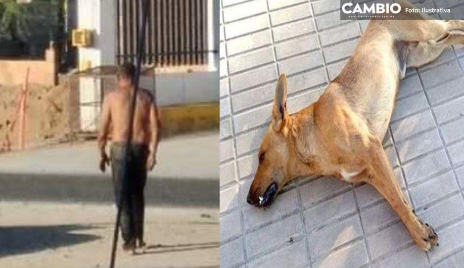 Caníbal de Sonora quema a perrito vivo y se come hasta los huesos