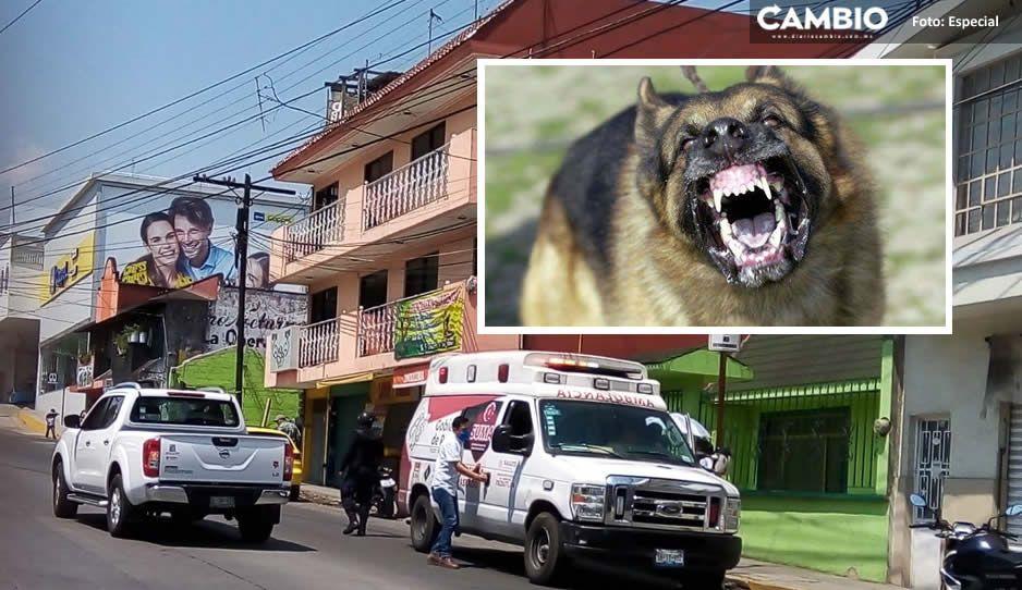 Agresivo pastor alemán ataca a niño de 7 años y abuelita de 80 en Teziutlán; son trasladados al hospital