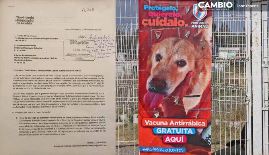 Movimiento Animalista de Puebla exige a Claudia garantizar el bienestar animal