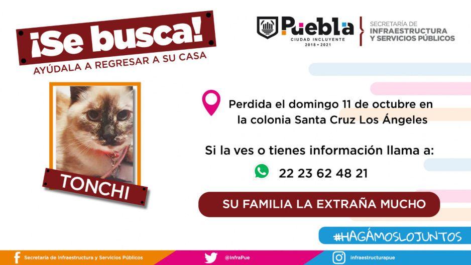 Ayuda a regresar a su hogar a los perritos Logan y Tigre además del gatito Tonchi