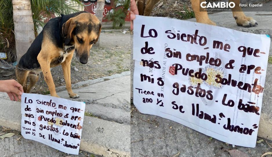 Poblano regala a su perrito Junior, pandemia lo dejó sin empleo para alimentarlo