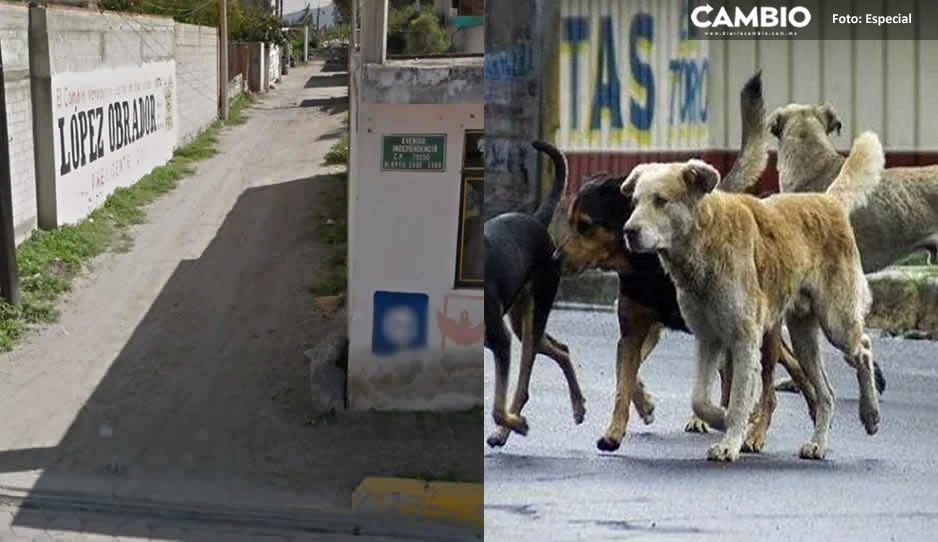 Mujer descuartizada y devorada por perros hambrientos en Acatzingo, murió de broncoaspiración