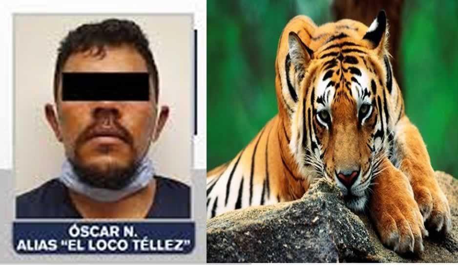 Un tigre, entre las exóticas mascotas de El Loco Téllez en El Ranchito