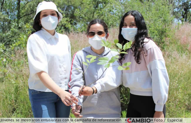 haras jovenes reforestacion