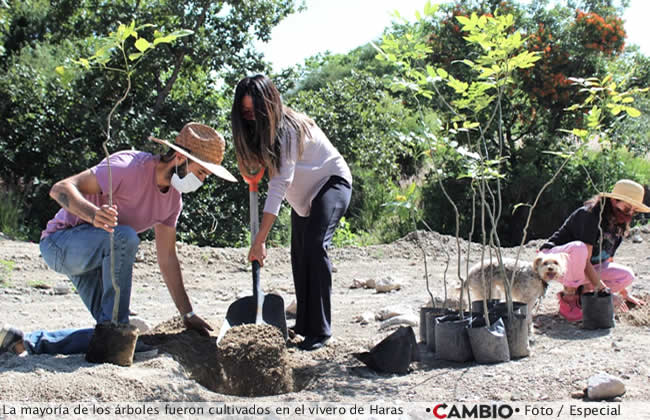 haras reforestacion vivero