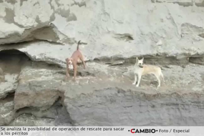 socavon rescate perritos