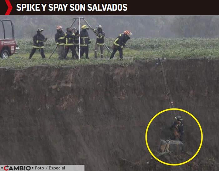 spike spay salvados