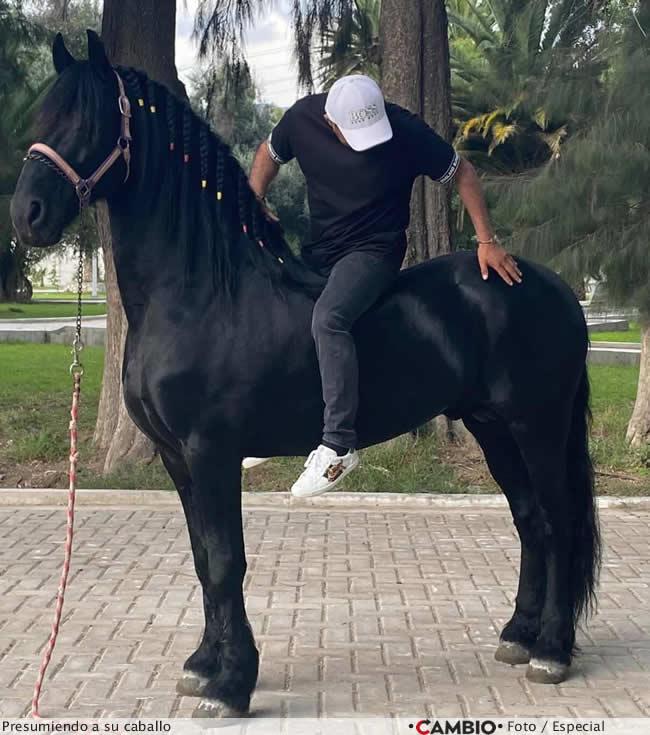 tonin caballo pura sangre presumiendo