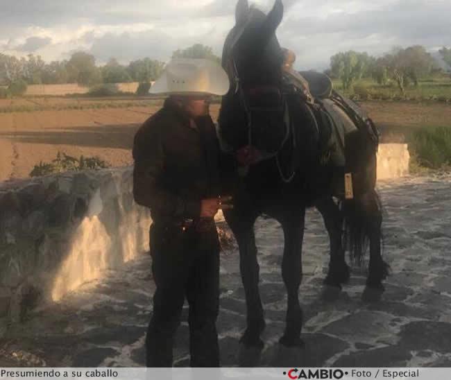tonin caballo pura sangre
