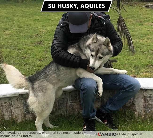 tonin husky encontrado