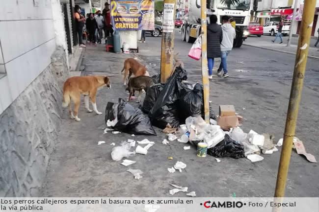 basura tecamacalco perros