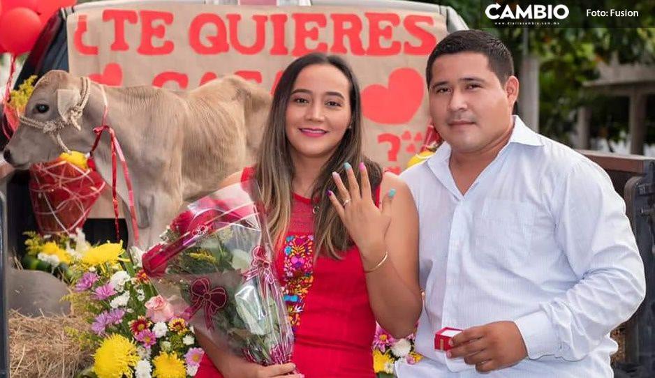 FOTOS: Con un becerrito, enamorado pide matrimonio a su novia; ¡ella le dijo que SÍ!