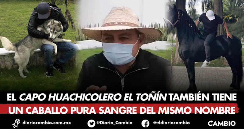 El Toñín movilizó al pueblo de Palmarito para que buscara a su perro Aquiles (FOTOS)