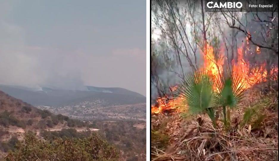VIDEO: Fuego amenaza bosque de San Diego La Mesa; lleva cinco días y no ha sido controlado