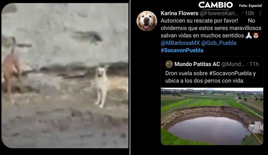 Ya no es Puebla: todo México pide que Segob autorice el rescate de Spike y Spay