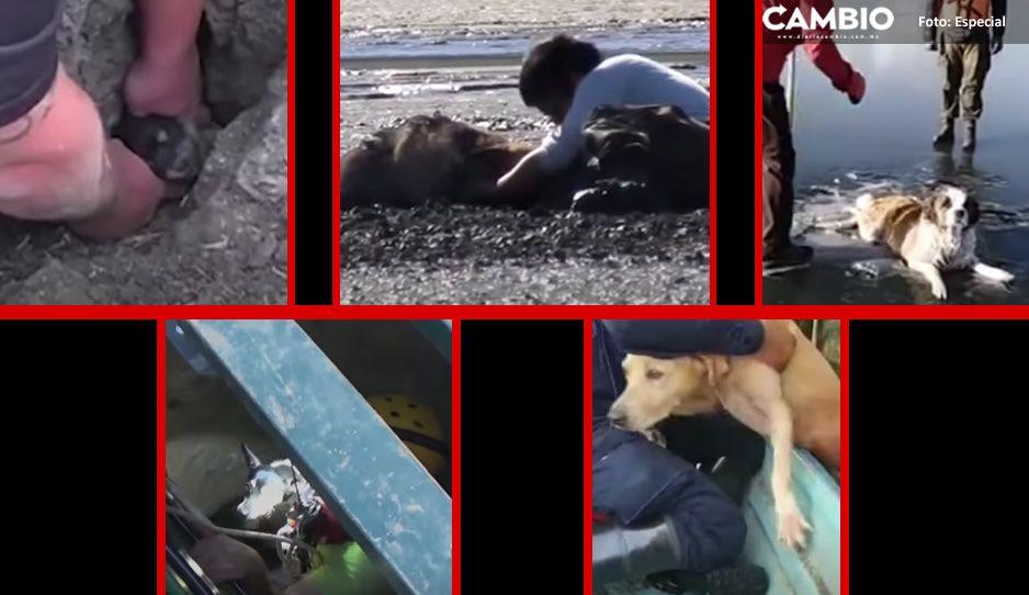 ¡Sin importar el peligro! Estos son los CINCO rescates de perritos que parecían imposibles (VIDEOS)