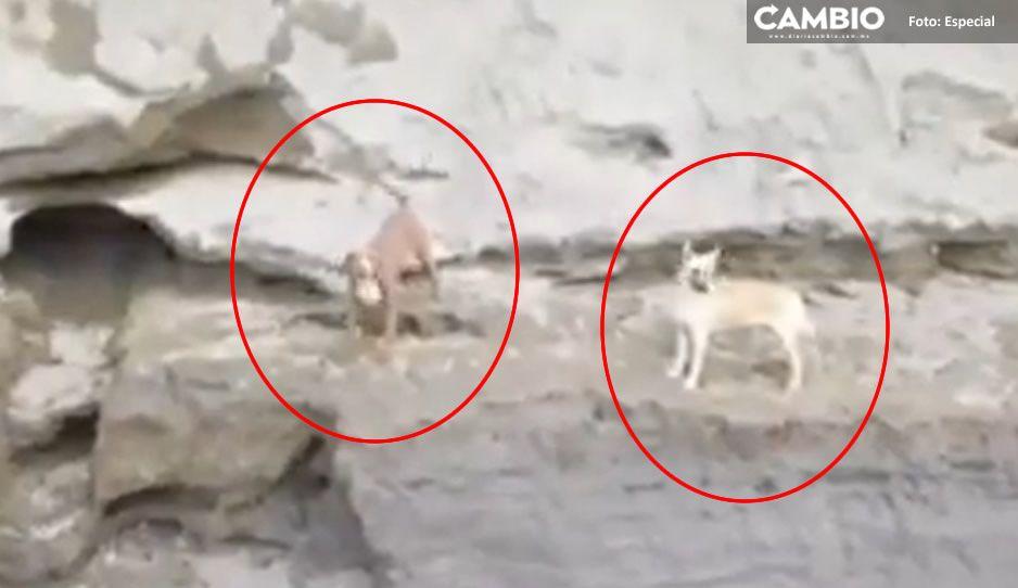 Los lomitos Spay y Spike están vivos, esperando su rescate en el socavón (VIDEO)
