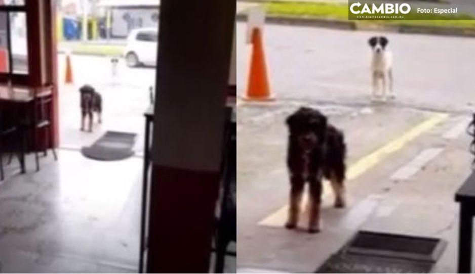 ¡Ternurita! Perrito callejero lleva a su 'amigo' a local donde siempre le regalan comida (VIDEO)